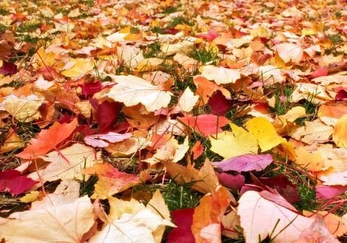 Fall Leaves on the ground AC Tune time